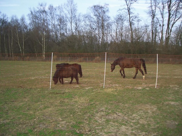 EURO MUSTANG WEIDENETZ für Pferde 145 cm