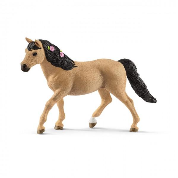 Connemara Pony Stute, Facebook-Winner